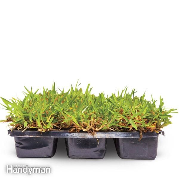 grass in plastic trays