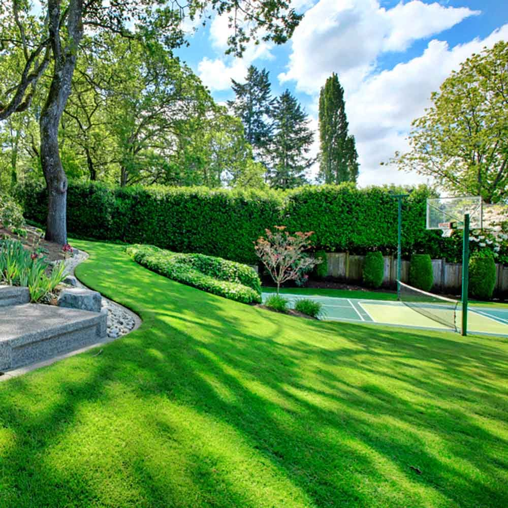 green grass with basket ball and tennis court