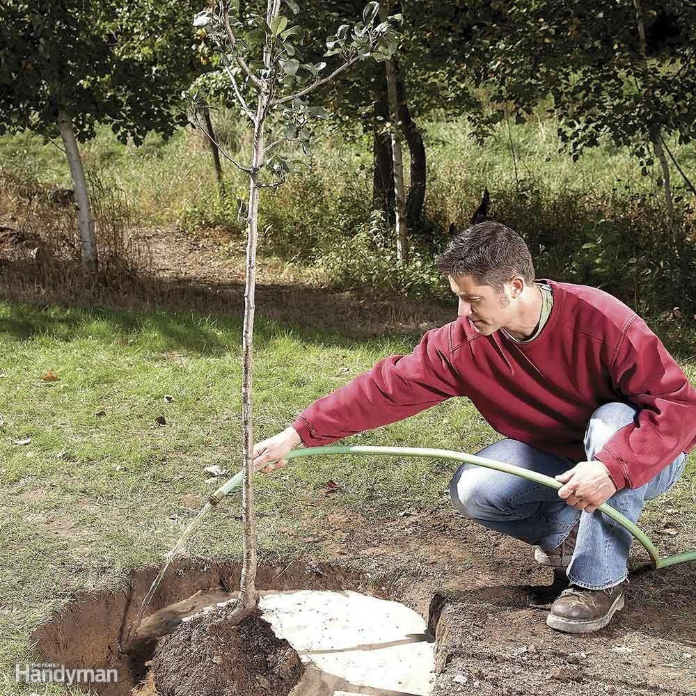 Plant a Father Tree