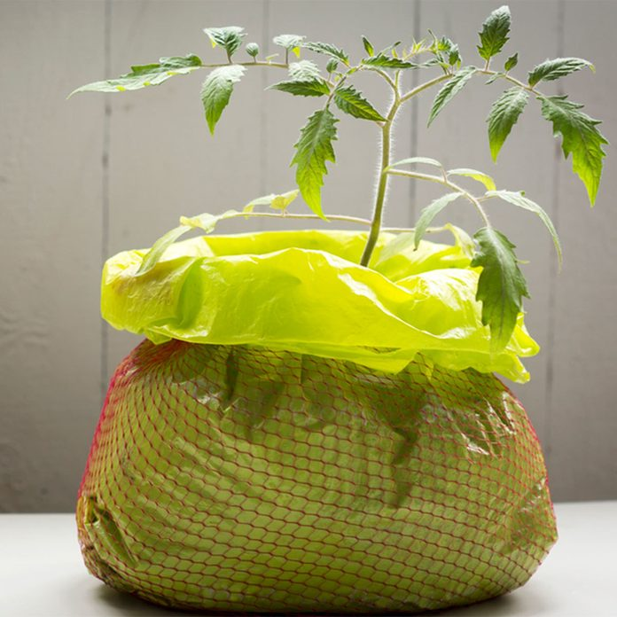 Grow tomatoes in a bag