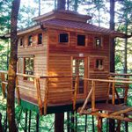 How to Build a Tree House – Pro Tips & Plans