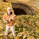 14 Tips for Dealing with Leaves Like a Pro