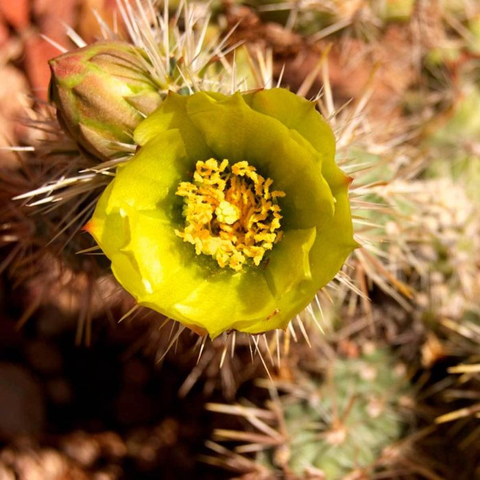 Try Xeriscaping