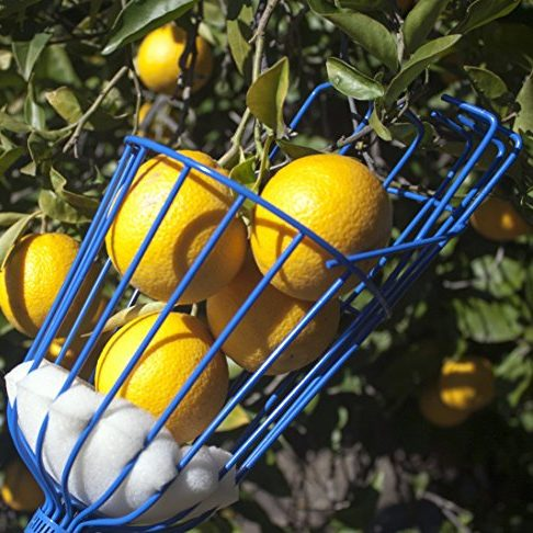 Fruit Picker