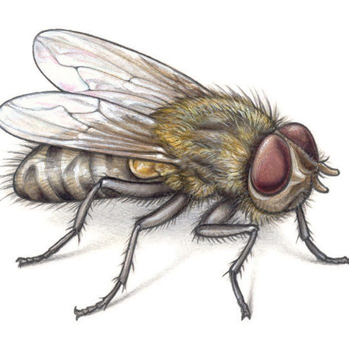 Keep Bugs Away