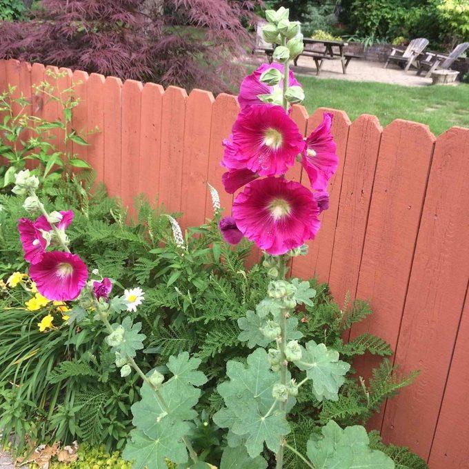 Grow Self-Seeding Flowers