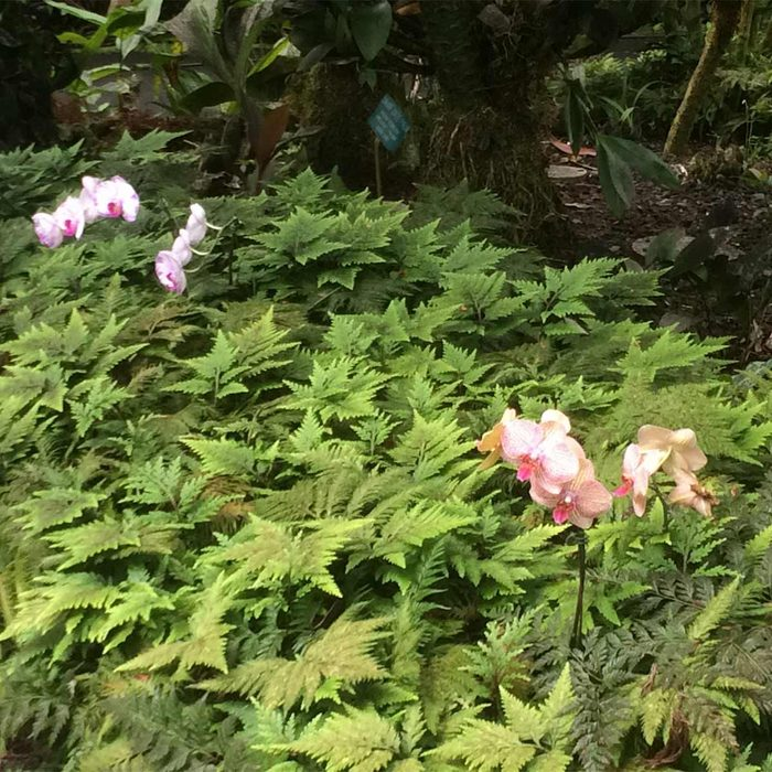 Orchids and Selaginella