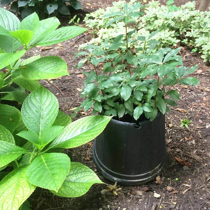 Reuse Nursery Containers