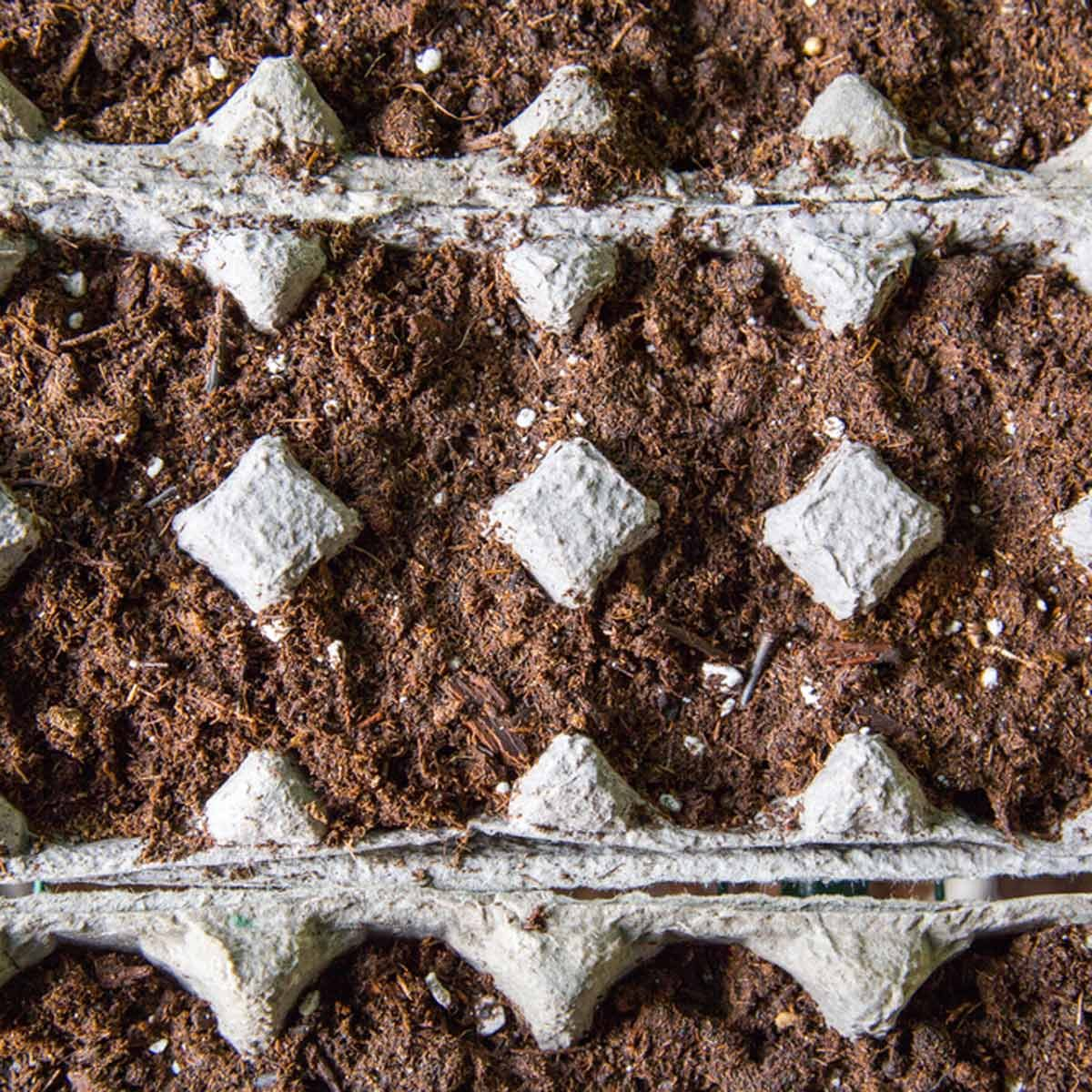 Seeds planted in egg cartons how to grow seeds indoors