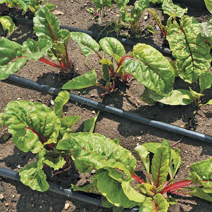 square foot gardening irrigation