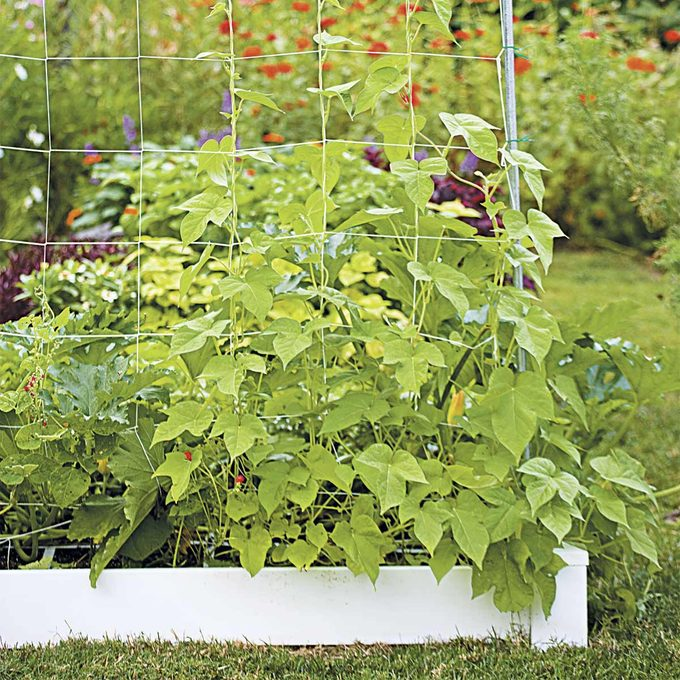 square foot gardening with trellis