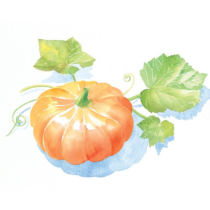 Grow the Plumpest Pumpkin