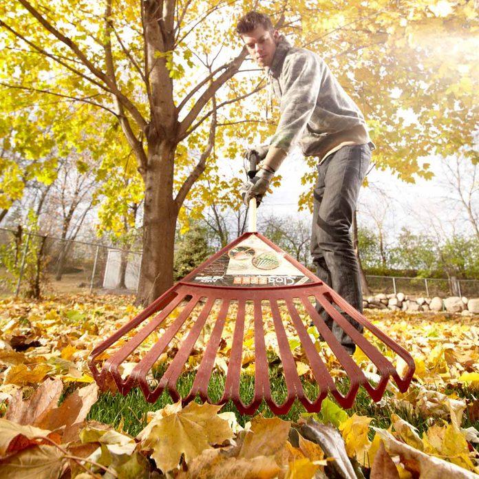 Rake Those Leaves!