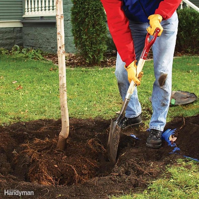 Plan a Tree Planting Party