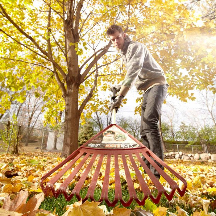 Fall Litter and Leaf Clean up