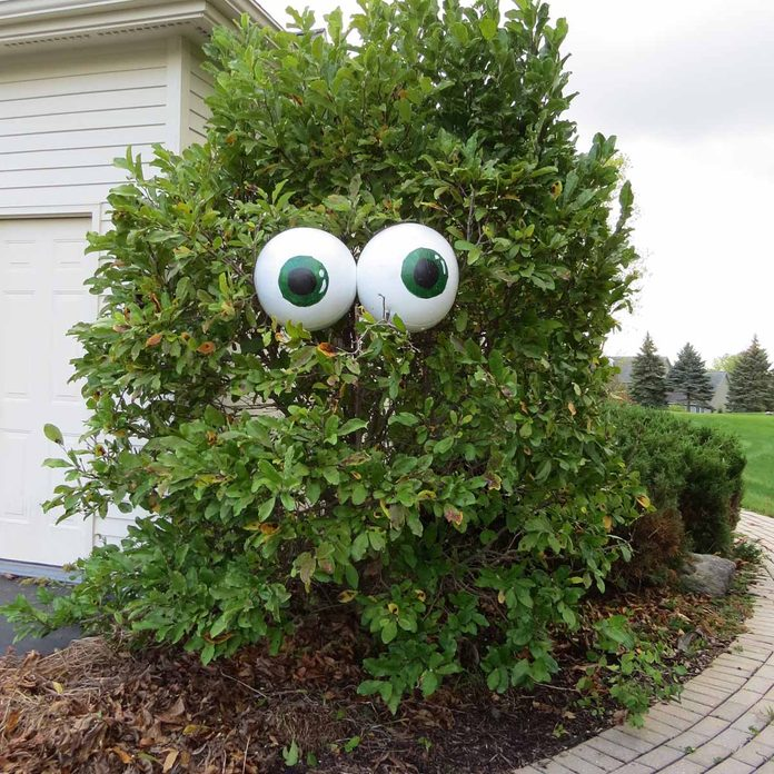 Giant Eyeballs Halloween