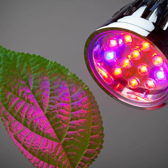 dfh14_shutterstock_77258875 indoor plants grow ligh