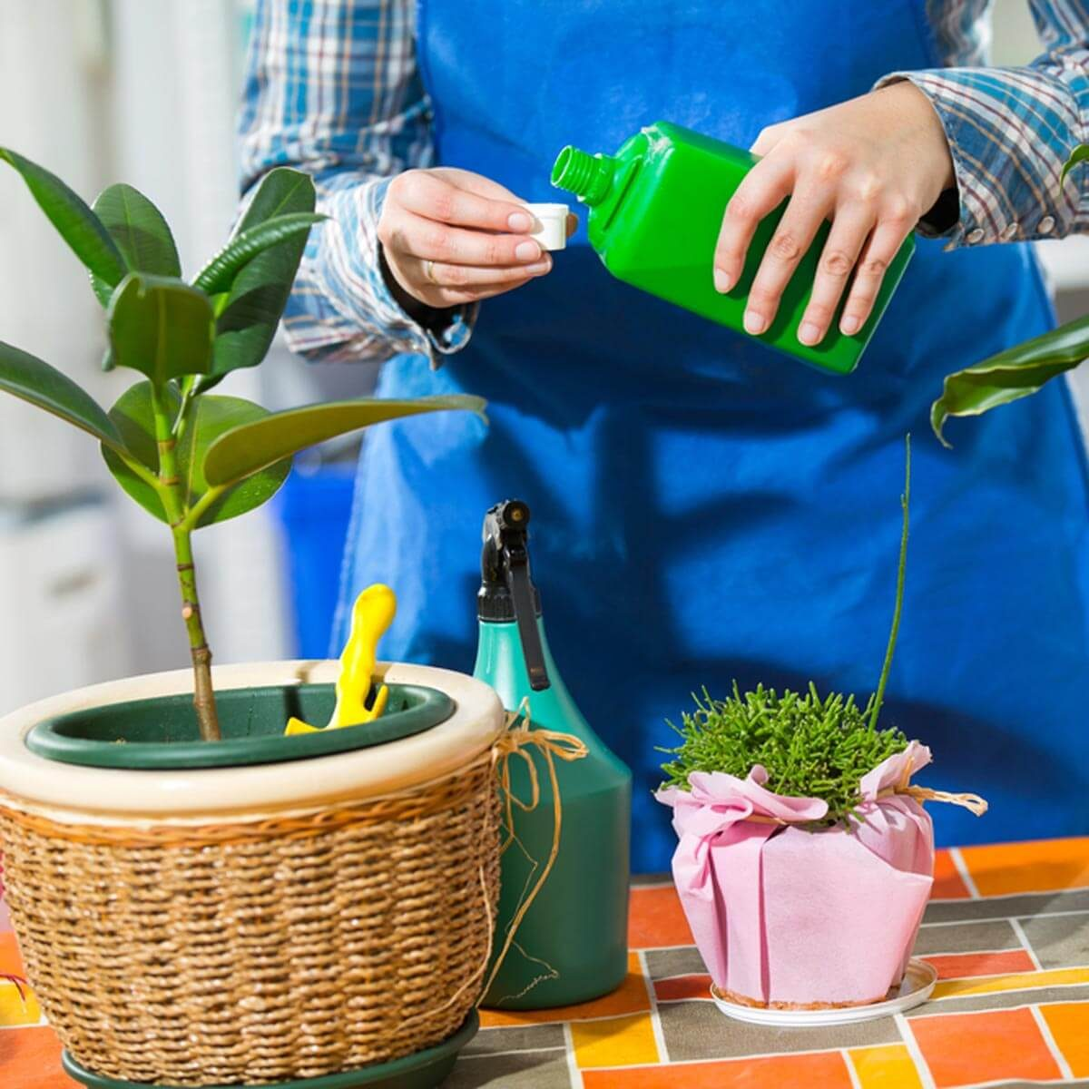 dfh2_shutterstock_243025486 fertilizing indoor plants