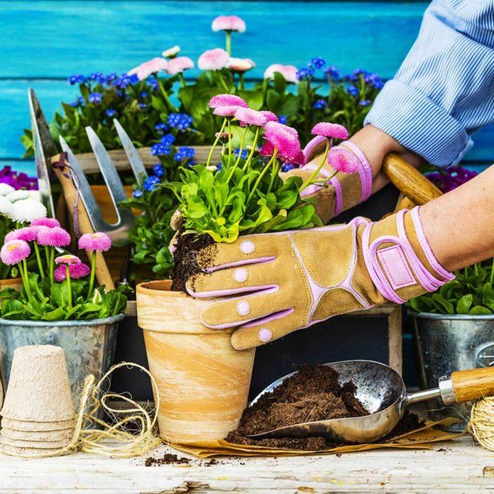 dfh6_shutterstock_270149396 gardening plants flowers terra-cotta pots repotting