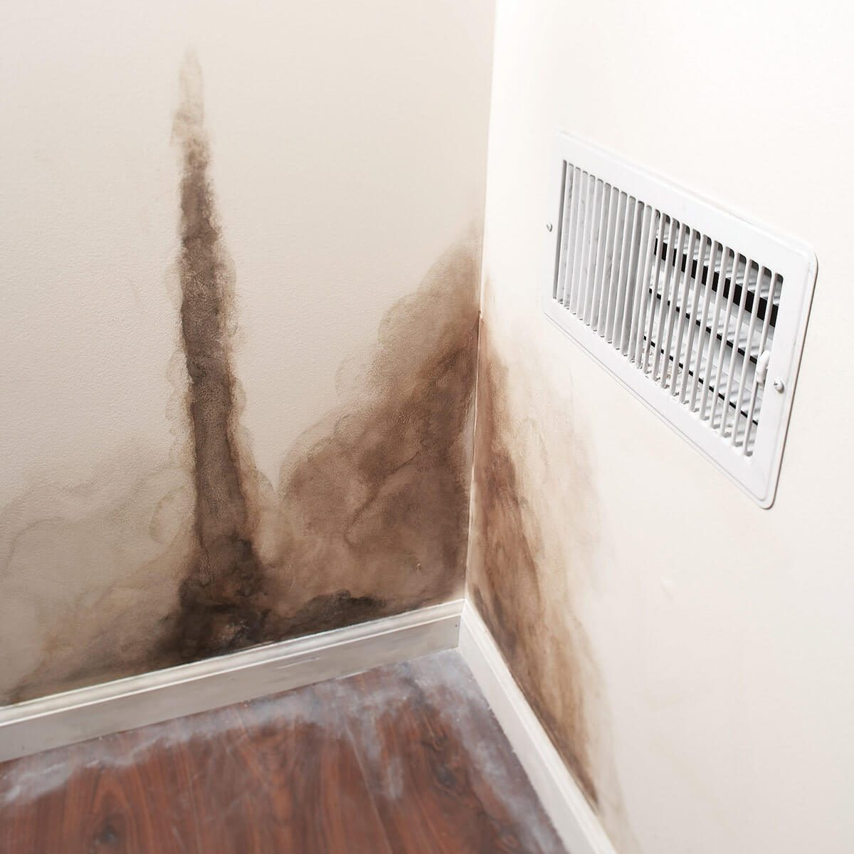 Mold Exposure Doesn't Always Mean Health Problems