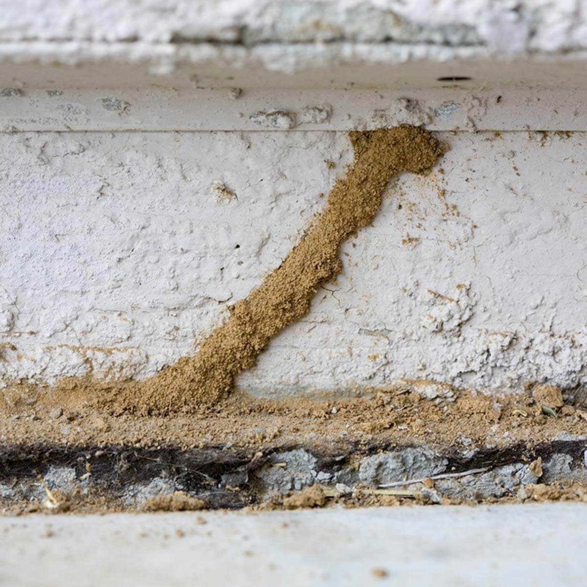 dfh1_shutterstock_18747745 inspect your foundation diy termite control