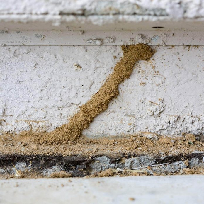 inspect your foundation diy termite control how to get rid of termites