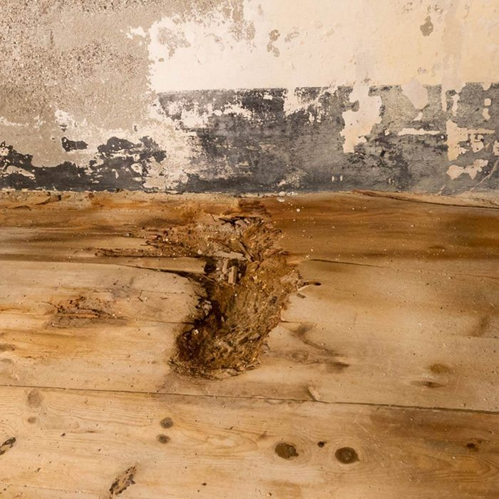 Install New, Sealed Floors