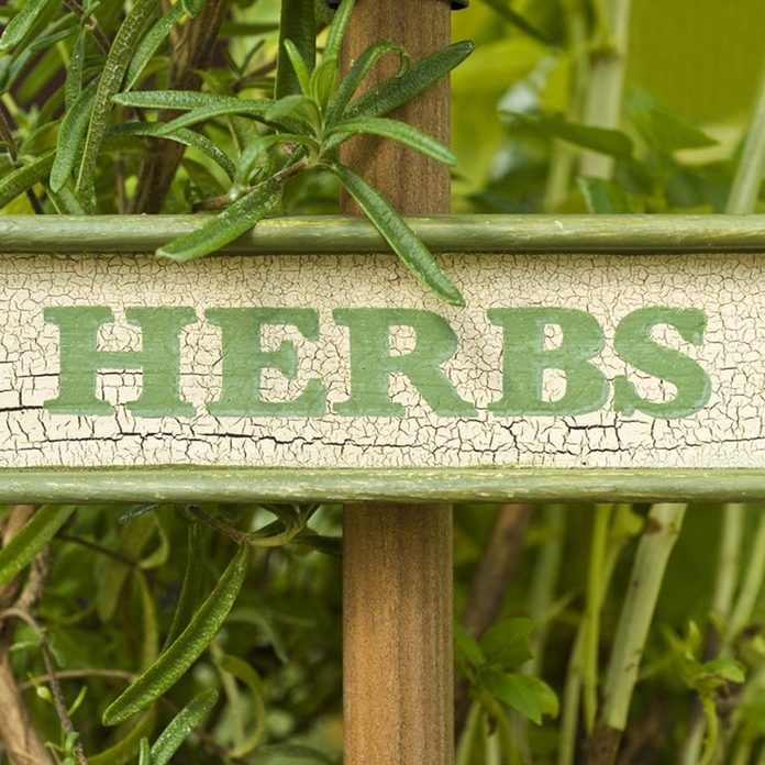 garden signs _61040710_07 herbs