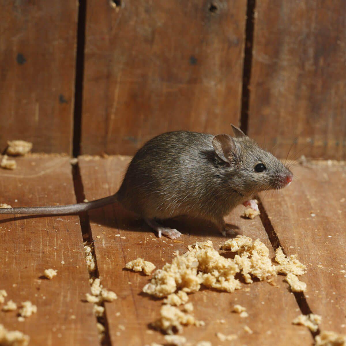 Discourage Pests