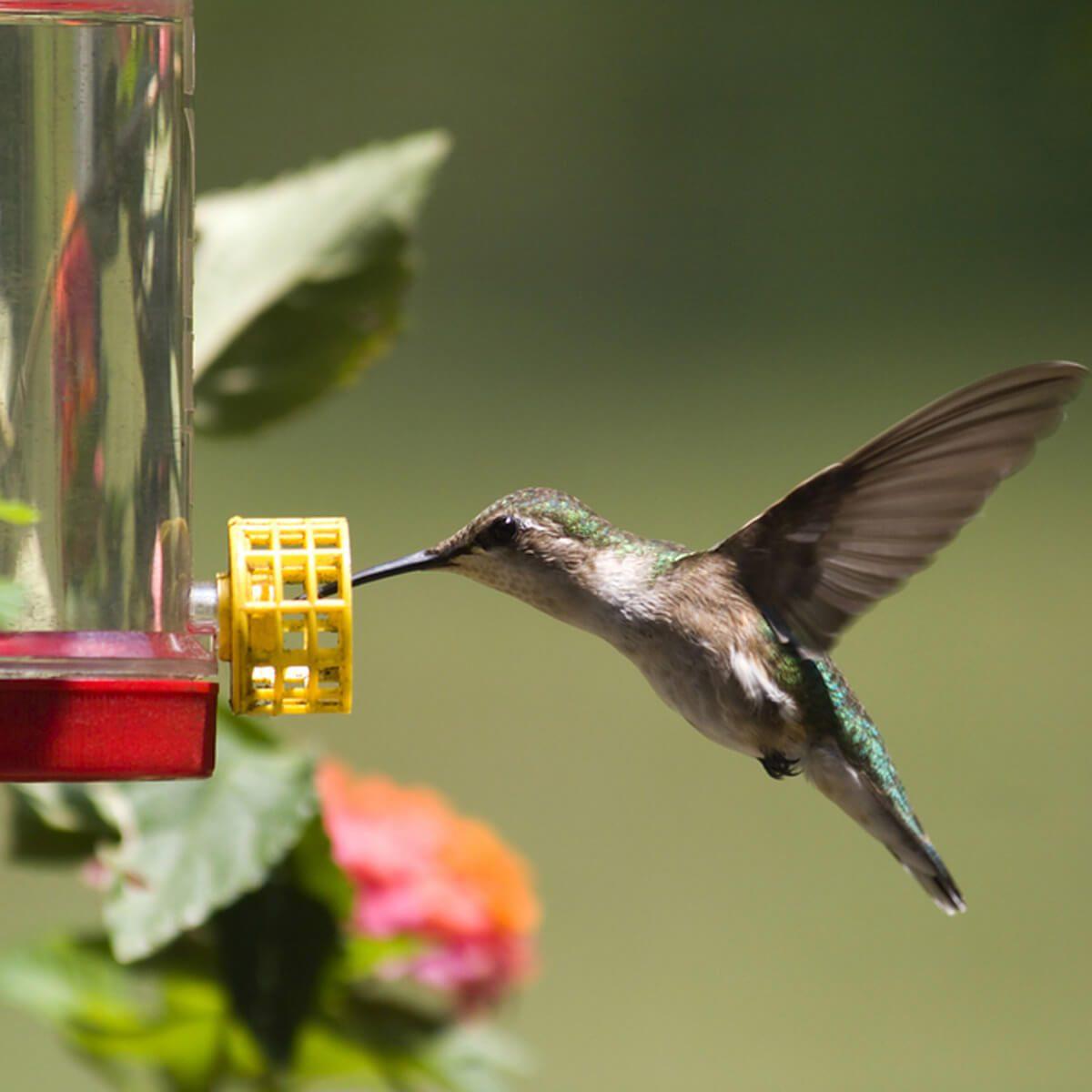 hummingbird feeder _131826041_20