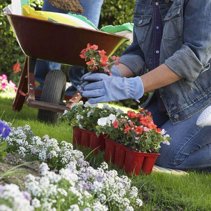 shutterstock_120294940 plant flowers gardening