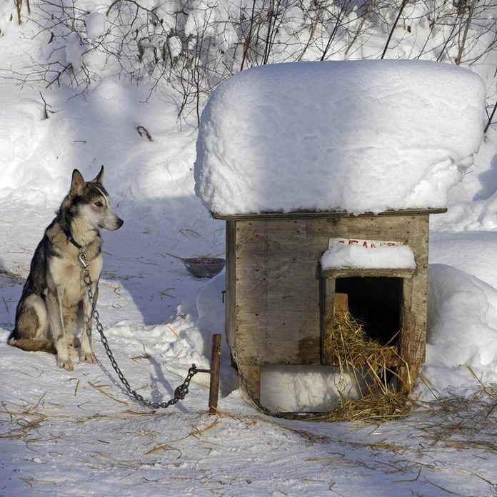 Insulate the Dog House