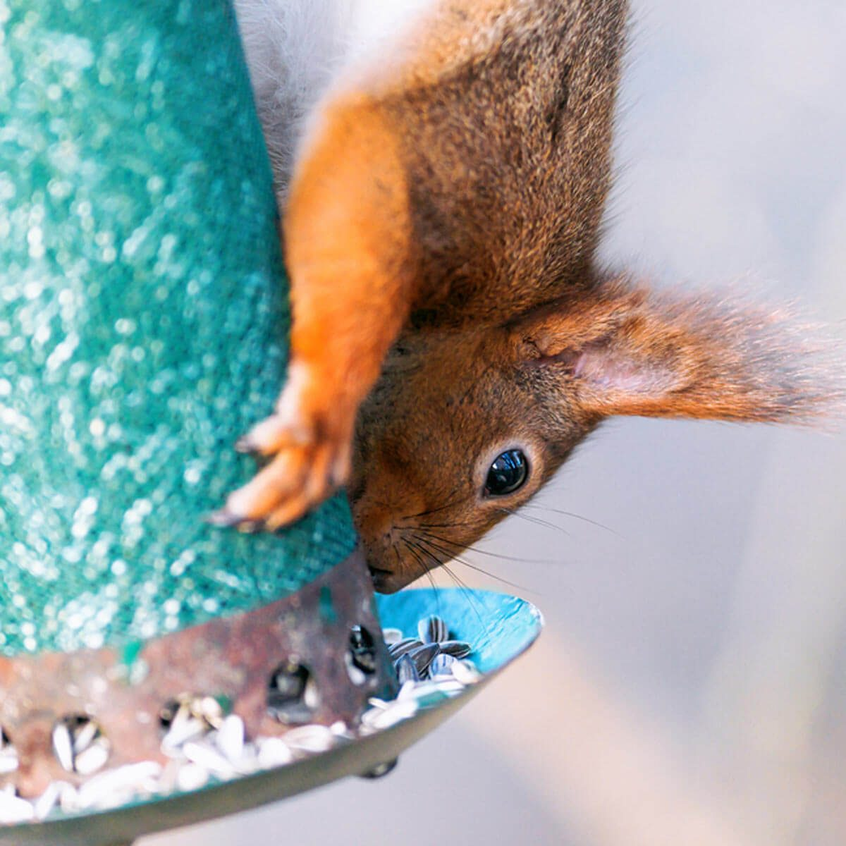 squirrel bird feeder