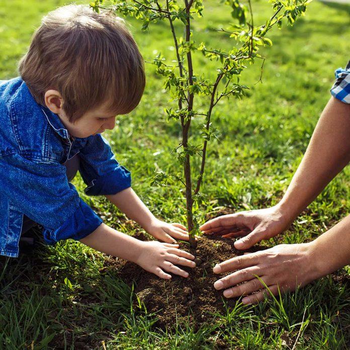 shutterstock_404041339 little boy planting tree