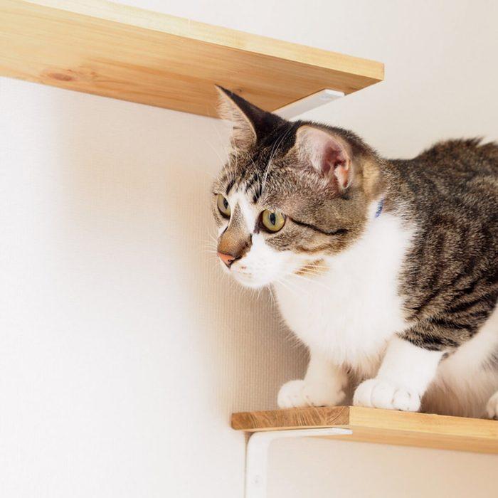 Cat Furniture: Kitty Shelves