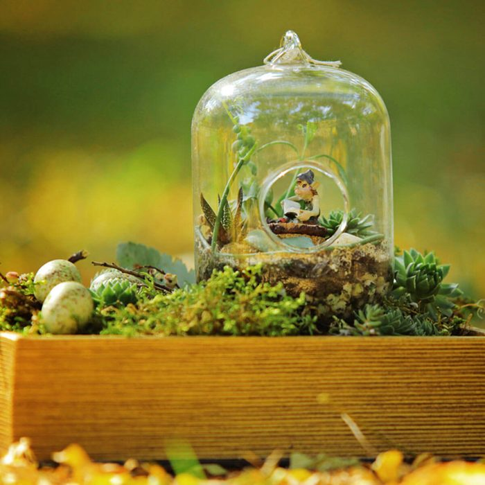 Terrarium Fairy Garden