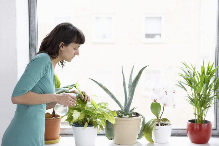 Plants near window.