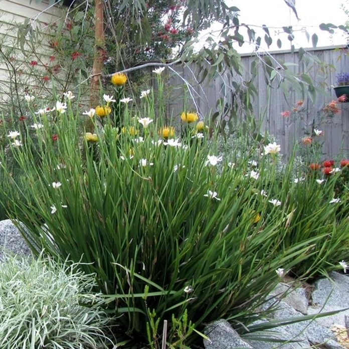shutterstock_707335804 native plants