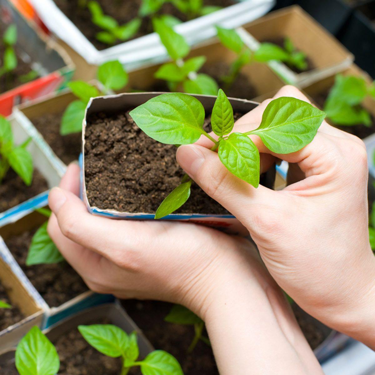 shutterstock_73540969 start your garden plants