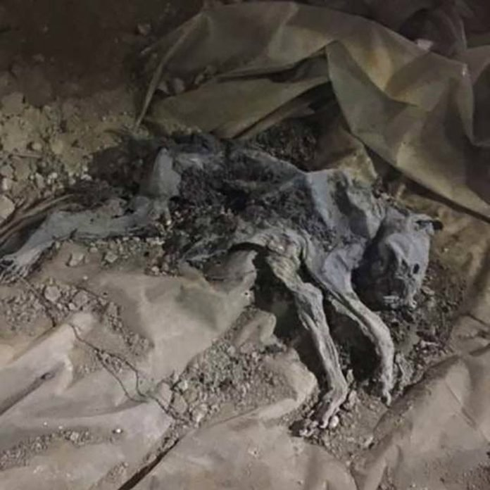 02_Skeleton_Top-5-Spookiest-Things-Found-During-Home-Inspections_Courtesy-WIN-Home-Inspection dog corpse