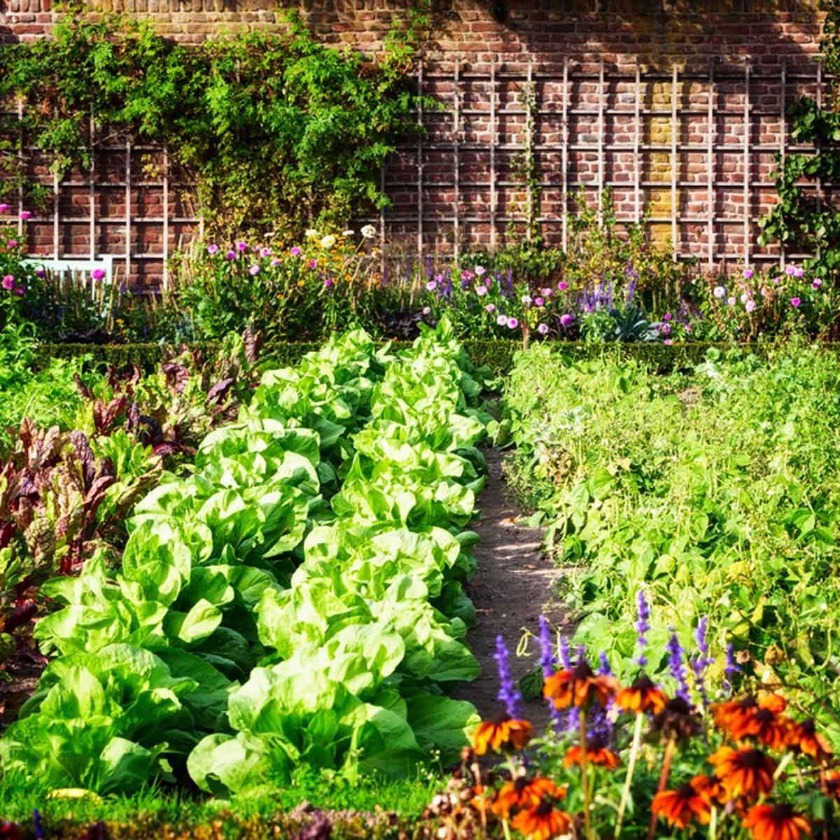 shutterstock_491150020 spring garden