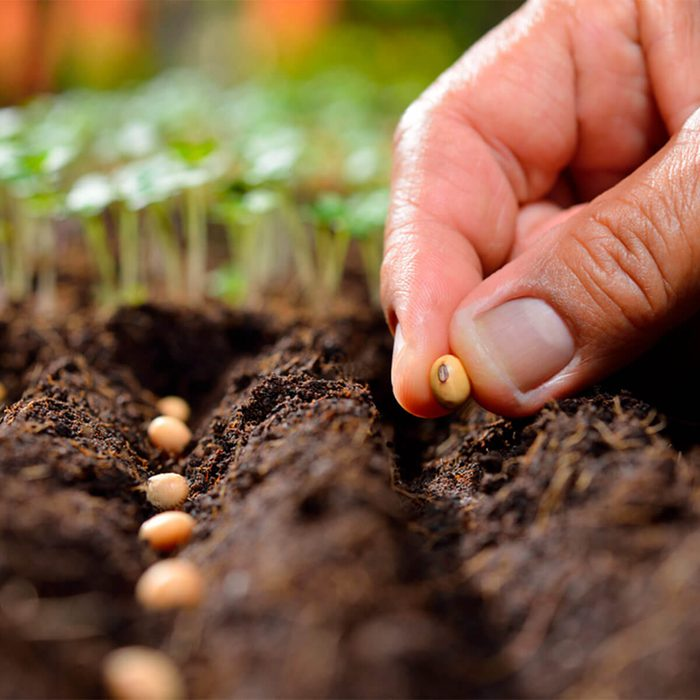planting vegetable seeds