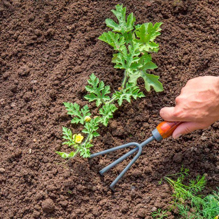 hand rake in garden