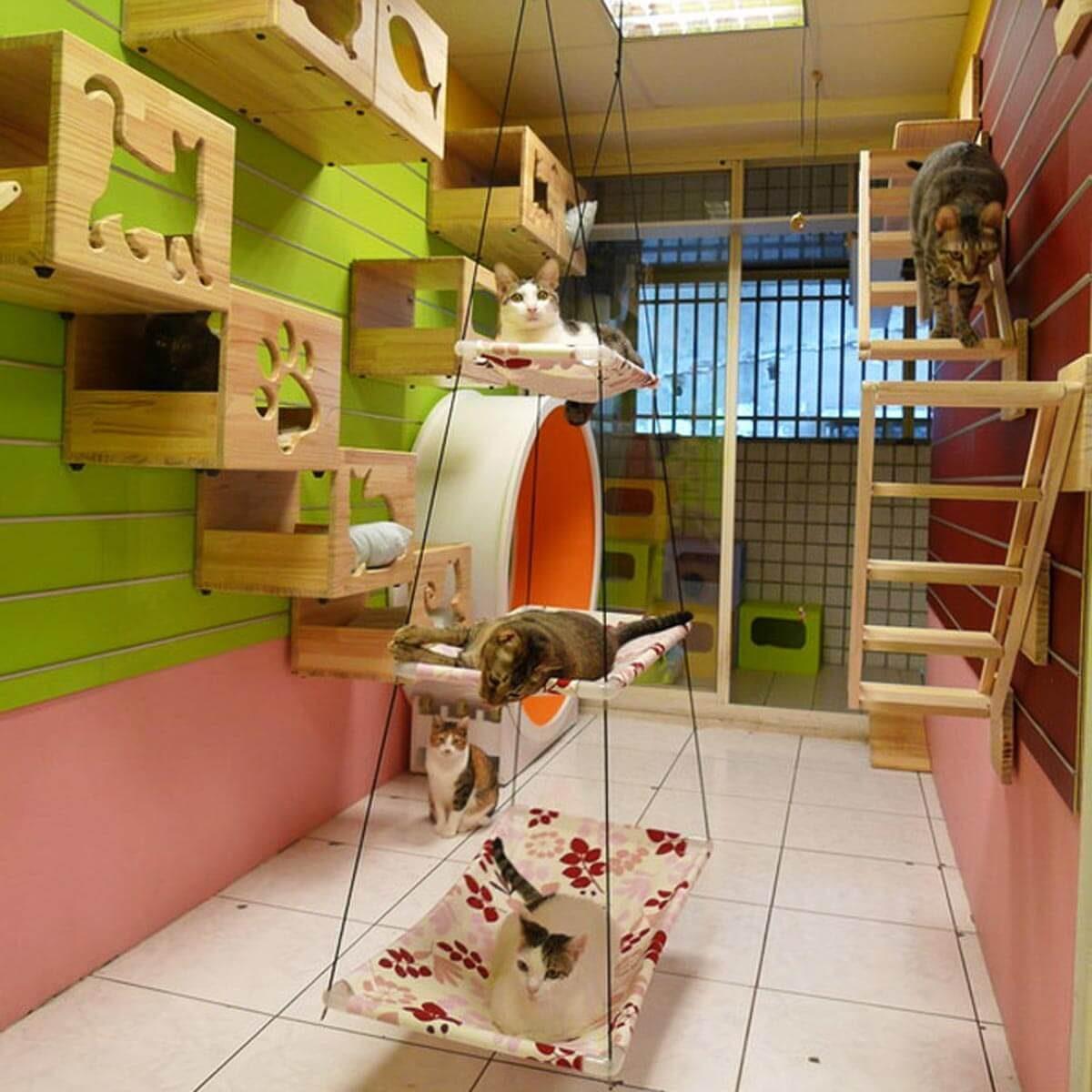 Wall-Mounted cat pet Playground