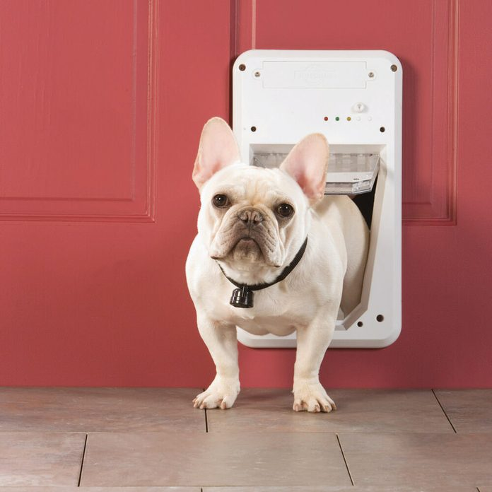digital dog door french bulldog
