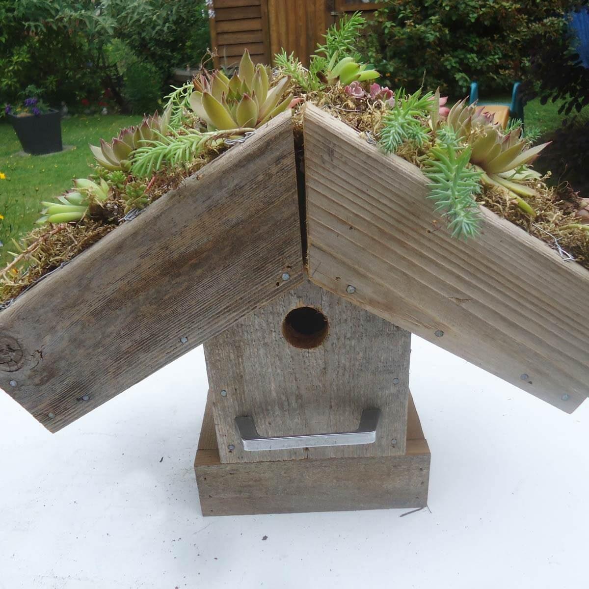 birdhouse green roof