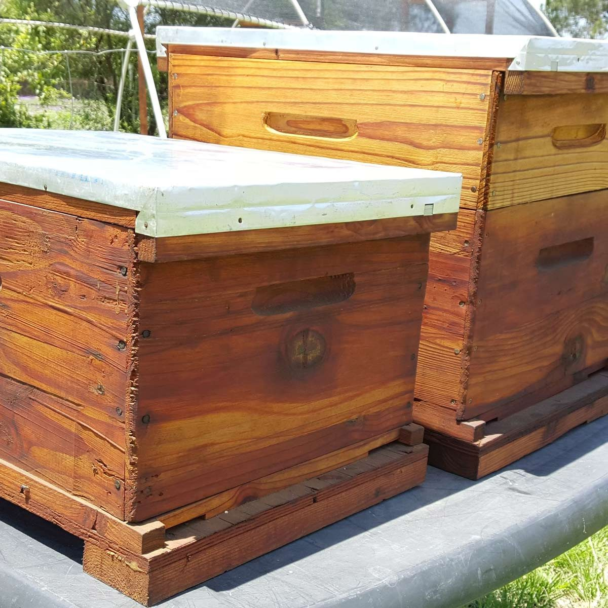 DIY Beginner Bee Hive