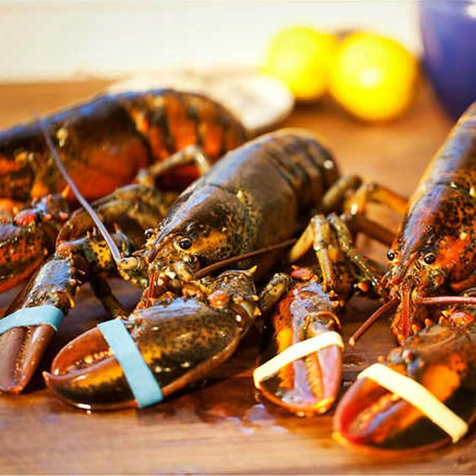 Live Maine Lobster