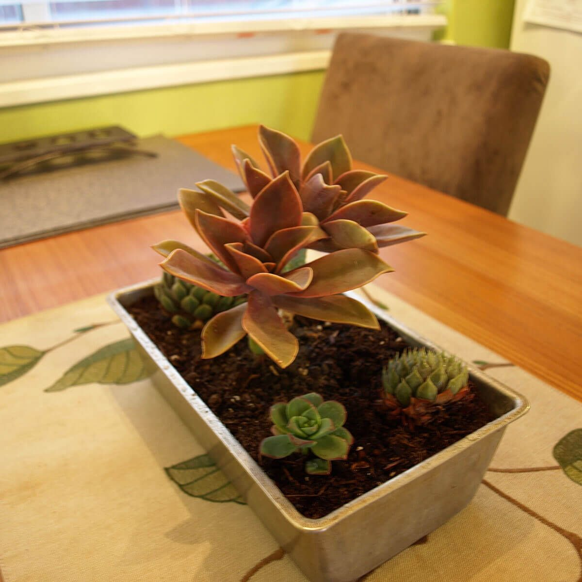 loaf pan succulent planter