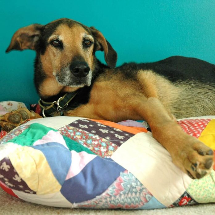Quilt Dog Bed